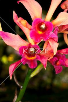image of a orchid. - Detailed shot of a orchid.