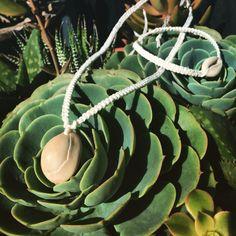 Hawaiian Seashells and Succulents
