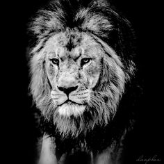 King of the jungle #lion