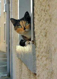 CAT IN WINDOW  ^..^