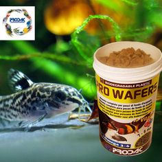 Aquarium Fish Food, San Pellegrino, Fish Recipes, Biodegradable Products, Beverages, Canning, Pisces, Diets, Fish