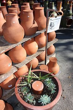 "Olla Natural Drip Irrigation - waters at root 15""H  x 12""W $9.97 ea, includes cap Saves 50% water, 75% when used with mulch"