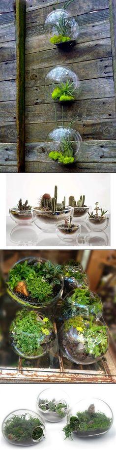 DIY-Home-Decor: DIY Terrariums.. Easy! Beautiful! Stylish! and So cute!!