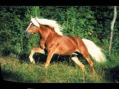 44 Raças De Cavalo.