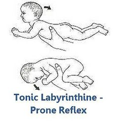 Tonic Labyrinthine Prone by aarbuckle9, via Flickr
