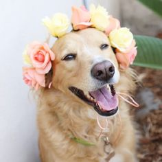 Make simple flower crowns for your pup