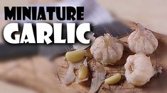 Miniature Garlic; Polymer Clay Food Tutorial