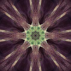 a leaf kaleidoscope Dandelion, Leaves, Flowers, Plants, Painting, Art, Dandelions, Painting Art, Flora