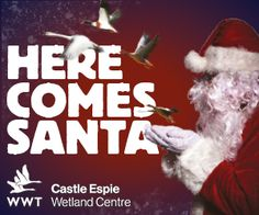 Santa is coming to WWT Castle Espie Sat 3 December - Sun 18 December!  (Saturdays and Sundays only)  http://www.wwt.org.uk/wetland-centres/castle-espie/whats-on/2016/12/03/santa-is-coming-to-castle-espie/