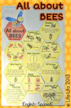 All about BEES craftivity English-Spanish