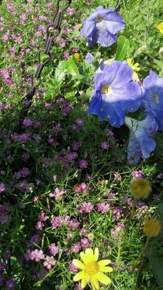 Petunia, pink baby's breath and daisy