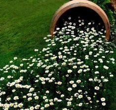 gartendeko mit Wiesenwucherblumen