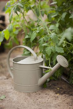 5L Watering Can Gooseberry