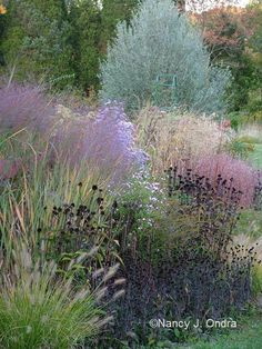 The Garden in Fall. copyright Nancy J. Ondra. grasses and seedheads