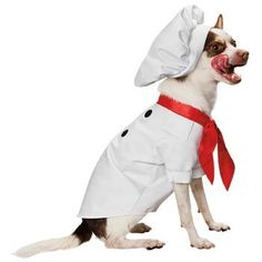 Petco Boo-tique Chef Dog Costume Size Large PETCO BOOTIQUE
