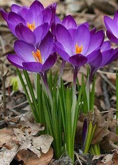 Exotic Flowers, Amazing Flowers, Pretty Flowers, Purple Flowers, Spring Flowers, Beautiful Flowers Wallpapers, Flower Fairies, Arte Floral, Flower Images