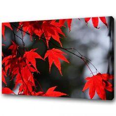 GLÖDANDE LÖNN  En riktigt röd japansk lönn med svartvit bakgrund ger otroligt fina kontraster, vilket passar bra i alla stilrena hem som behöver lite extra färg. Canvastryck.