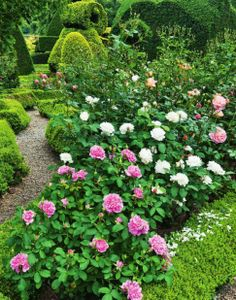 Topiary Garden at Levens Hall is one of the most famous English gardens you should visit. Find garden tips here.