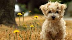 Come offrire un'alimentazione corretta ad un cane di piccola taglia