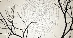 Fotografía: Chema Madoz.     Entre las ramas de un árbol, telarañas cargadas de palabras , hilos de significados que se confunden con la n... Social Media, Poems, Chema Madoz, Illustrations, Rooftops, Branches, Teachers, Words, Poetry