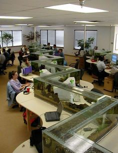 Coolest office aquarium ever.