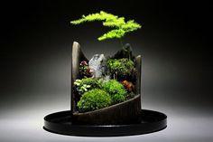 Koke bonsai