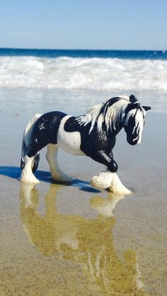 My photo of a horse on a beach I wish that was me!