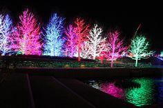 Christmas Lights at Chesapeake