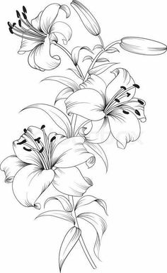 200 Pictures of Female Arm Tattoos for Inspiration - Photos and Tattoos - Flower Tattoo Designs - Tiger lilies. Realistic Flower Drawing, Simple Flower Drawing, Beautiful Flower Drawings, Pencil Drawings Of Flowers, Flower Sketch Pencil, Drawing Flowers, Delicate Flower Tattoo, Lily Flower Tattoos, Flower Tattoo Arm