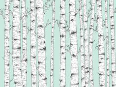 Birch Tree Vector