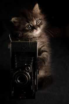 Photographer kitty