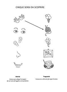 La maestra Linda : I cinque sensi Senses Activities, Preschool Learning Activities, Learning Italian, Science, Pixel Art, Worksheets, Children, Human Body, Early Education