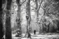 Lonely among Friends by Lars van de Goor Better on Black.click or press… Tree Faces, Shake Hands, Photo Black, Travel Images, Lightroom Presets, Lonely, Travel Photography, White Photography, Around The Worlds