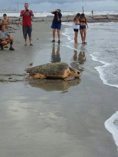 sea turtle beauty spotted at 47th & Sea Wall 7/19/13