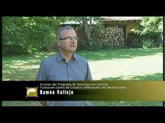 El bosque protector. La desertificación: Un problema global - YouTube