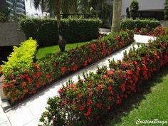 Mini Ixora - Ixora coccinea compacta - Flores y follaje - Landscaping Plants, Outdoor Landscaping, Front Yard Landscaping, Outdoor Gardens, Front Yard Garden Design, Front Garden Landscape, Landscape Design, Plumeria Pudica, Small Gardens