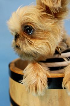 Top 10 Smallest Dog mother nature moments