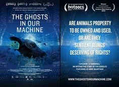Ghosts of Our Machine