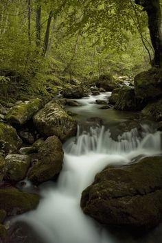 Rača - Along the Rača river, Tara National Park, western Serbia.