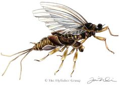 Mayfly: Trico (Emerger)