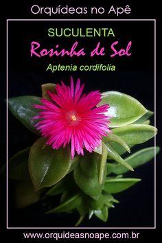 Succulent Gardening, Succulent Care, Planting Succulents, Morning Flowers, Cactus Y Suculentas, Green Life, Bonsai, Flora, Outdoor