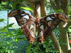Victoria Butterfly Gardens, Victoria BC