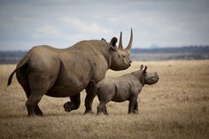 The only lodge on this private rhino conservancy