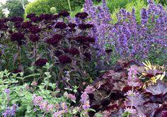 Närbild på rabatt i purpur och lila.