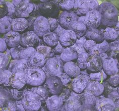 Blueberries:  the easiest fruit to grow