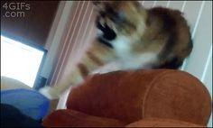 Photo in Gifs Cat - Google Photos