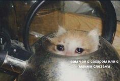Nao Memes The post Nao Memes appeared first on Memes Apaixonados. Sad Cat Meme, Cute Cat Memes, Cute Love Memes, Bad Memes, Funny Video Memes, Stupid Memes, Russian Cat, Russian Memes, Stupid Pictures