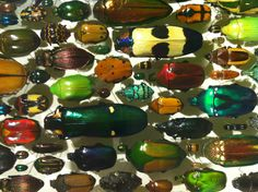 Insectarium, Montreal / beetles in jewel colors!