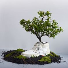 Plant OAT's Biodegradable Sneaker, Watch It Bloom into Flowers! Sustainable Design, Sustainable Fashion, Sustainable Living, Sustainable Products, Old Shoes, Men's Shoes, Shoes World, Green Fashion, Gardens