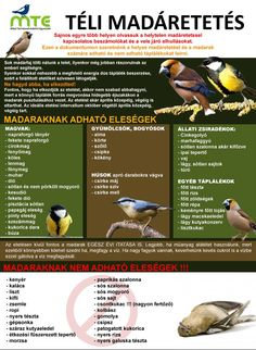 Feeding Birds In Winter, Tree Day, Nature Study, Cute Birds, Earth Day, Primary School, Permaculture, Garden Projects, Amazing Nature